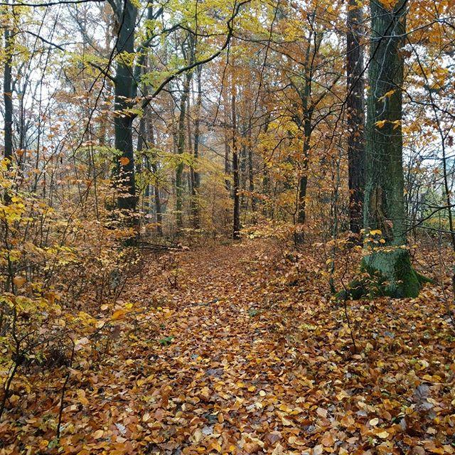Mittagspause im Nebelwald, der Herbst nimmt die Deckung. Dafür gibt es etwas mehr Weitblick
