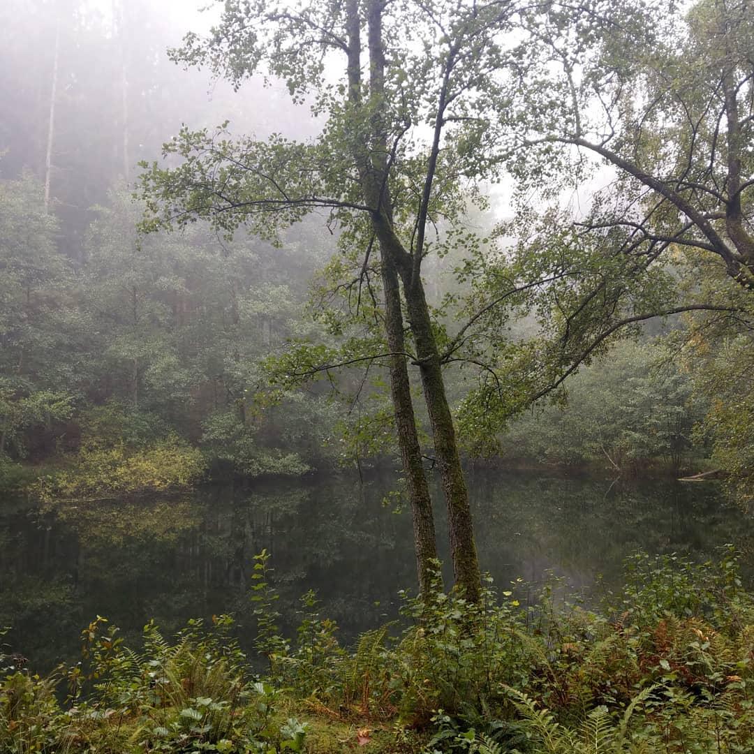 Burgwald im Nebel