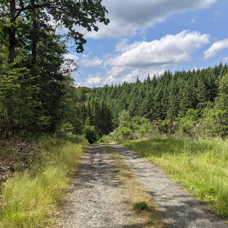 Wald-Tour mit AusblickVon der Sackpfeife ging es durch den Wald links und rechts vom Grad soweit auf und ab bis Treisbach und dann auf der anderen Talseite hinter Niederasphe und zwischen Oberasphe und Fronhausen zurück ins Wollmartal. Waren in Summe 26 km.