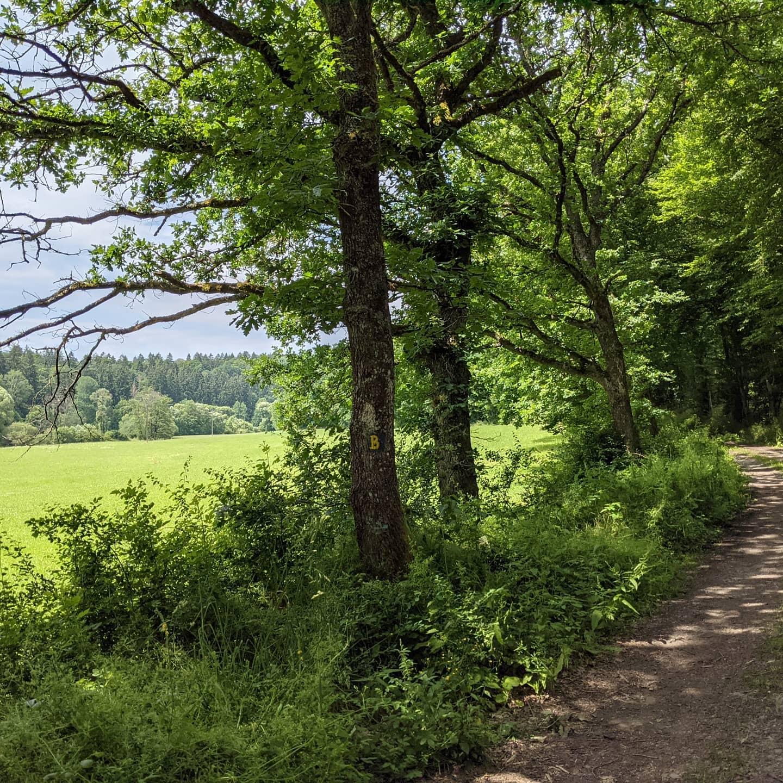 Butzmühlenweg 2021Rundweg mit ca. 14 km Länge.Tour with a length of approx  14 km.